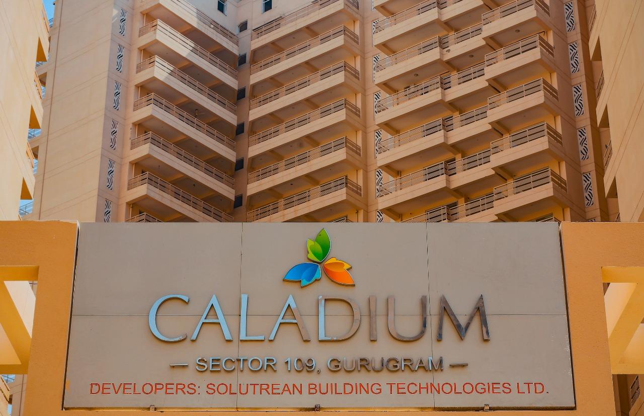 SBTL Caladium
